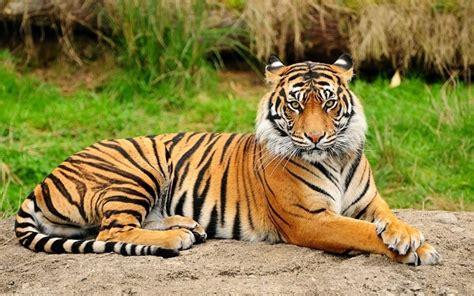 Animales Vertebrados Donde Viven Como Nacen | animales vertebrados donde viven como nacen
