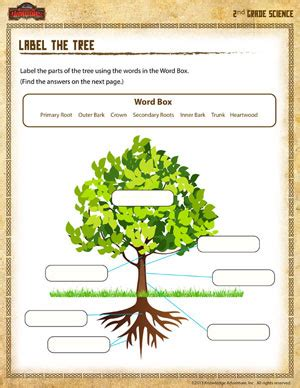 label the tree free science worksheet for 2nd grade