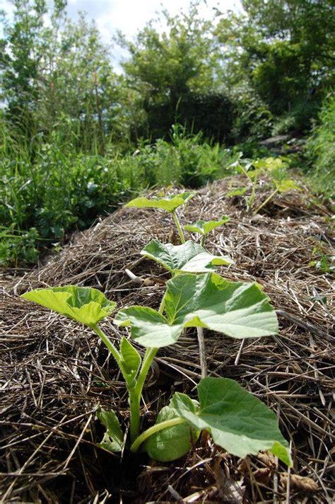 Planter En Juin by Que Faut Il Planter En Juin