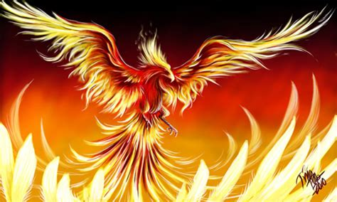 30 great phoenix illustration artworks naldz graphics
