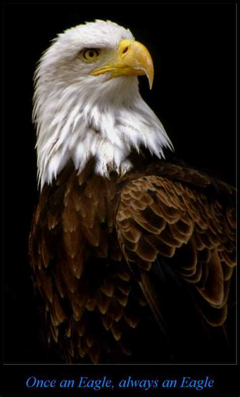 once an eagle once an eagle always an eagle