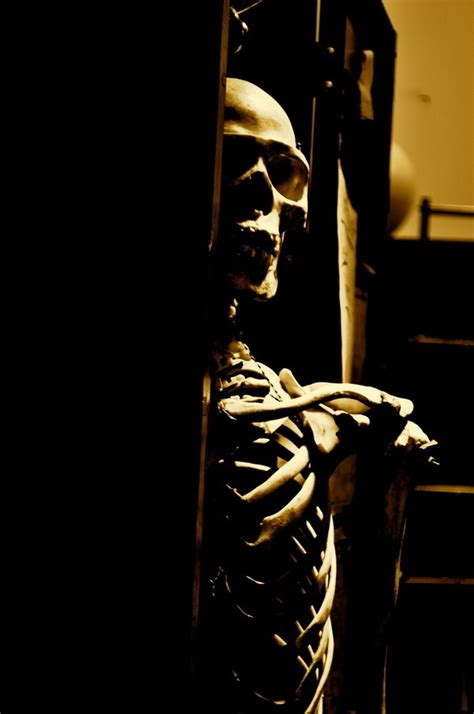 A Skeleton In The Closet by 107 Best Images About Skeletons An Bones On