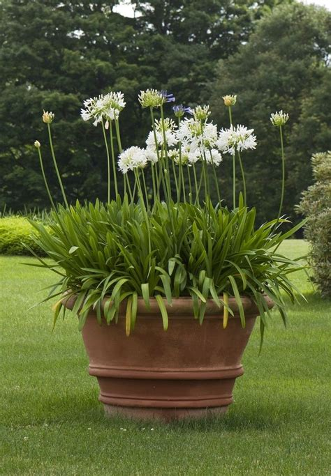 pots for plants planters amazing large pots for plants large pots for