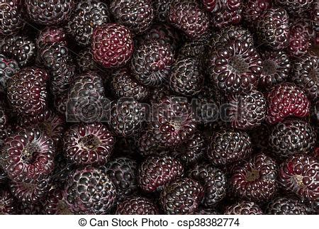 picture of background of fresh ripe black raspberries top