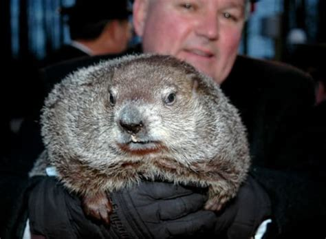 groundhog day phil groundhog day 2012 results shadow winter to continue