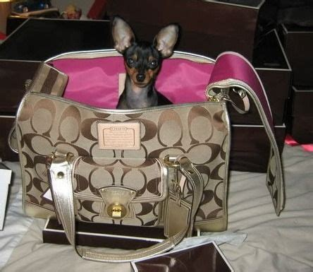 coach carrier coach carrier bags purses carriers