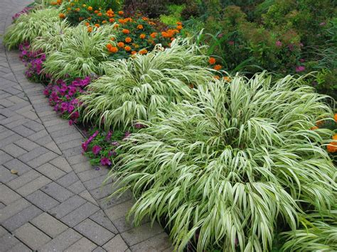Container Gardens For Shade - rotary botanical gardens hort blog hakone grass a shade garden must have