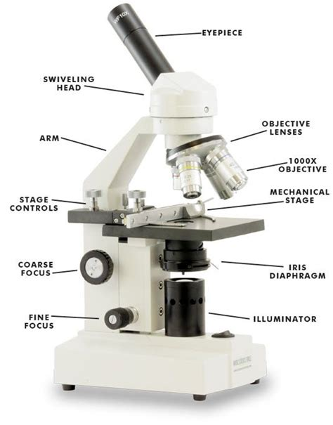 diagram of microscope parts of a microscope school science hs biology