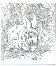 Hard of animals colouring pages
