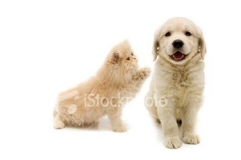 Best Promo Serokan Untuk Kotoran Anjing Kucing 2 kucing dan anjing welcome to mori manjusri s