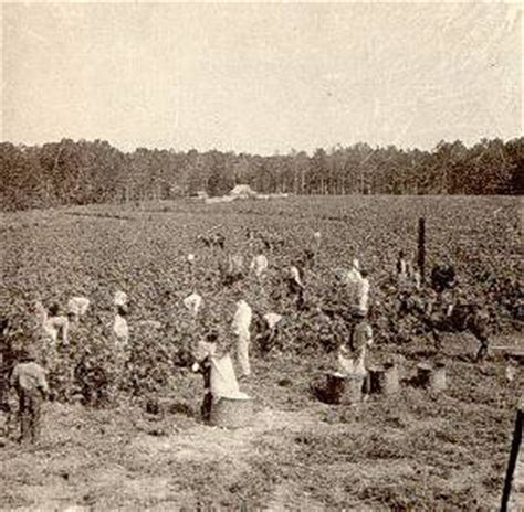 harvesting plantations in tarkeeth state antebellum louisiana agrarian