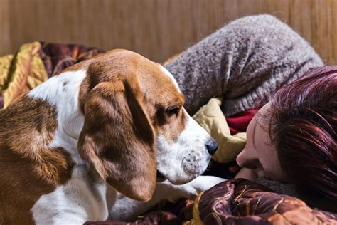 canine comforts canine comfort do dogs know when you re sad pets emotion