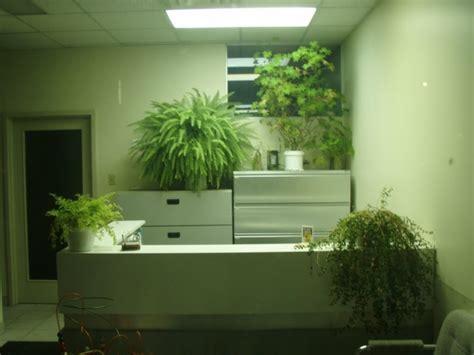 plant for office desk am 233 nagement de plantes d int 233 rieur pour le bureau de travail