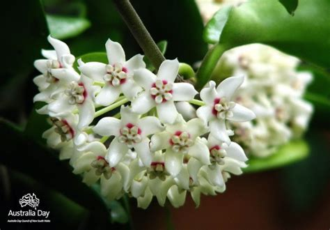 fragrant flowering plants climbing plants that produce fragrant flowers