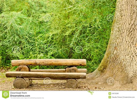 bench in forest bench in forest royalty free stock images image 24576289