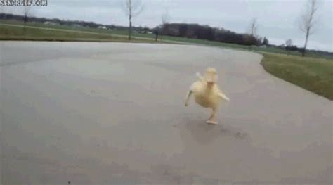 duck gamergif gifs find share  giphy