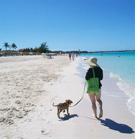 puppy island turks and caicos there is an island where you can cuddle puppies on the or even adopt them