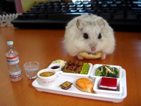 hamsters eating tiny foods