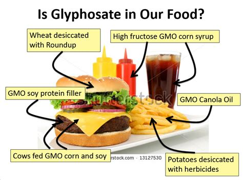 How To Detox Your From Gmos And Pesticides by Roundup In Our Food Glyphosate And Disease Autism