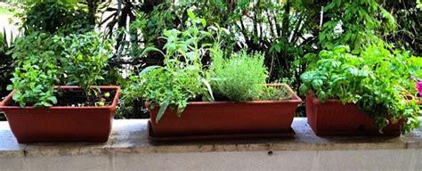 orto terrazzo il terrazzo si tinge di verde e diventa un orto sale pepe