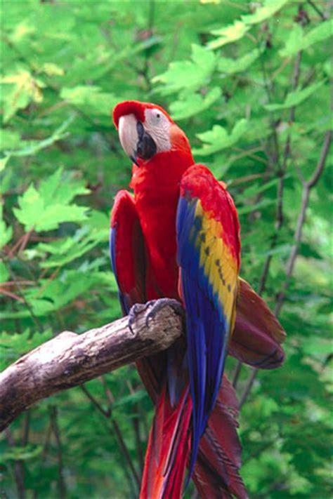 kids zone macaws