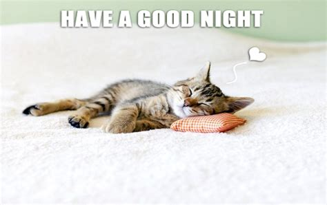 Goodnight Meme Cute - cut your tiredness before going to sleep with good night memes