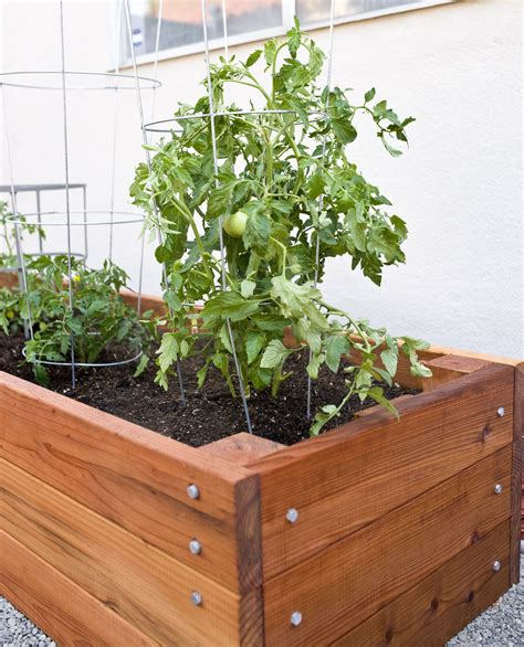 large redwood planter box  tomatoes redwood planter