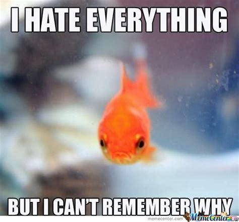 Funny Fish Memes - fish memes best collection of funny fish pictures