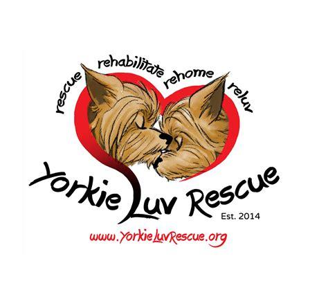 yorkie rescue goodyear az yorkie rescue inc ebay for charity