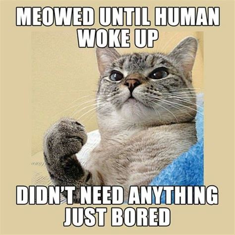 Funny Human Memes - 80 funny cat pictures to brighten a bad day