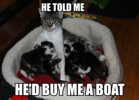 Cat Mom Meme - attack of the funny animals 40 pics
