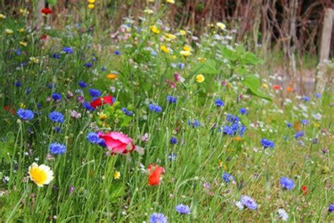 wiese anlegen blumenwiesen und wildblumenwiesen anlegen garten