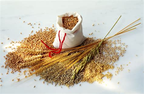 whole grains and ibs south diet starches and grains allowed