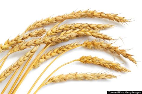 whole grains reduce inflammation 18 health benefits of whole grains