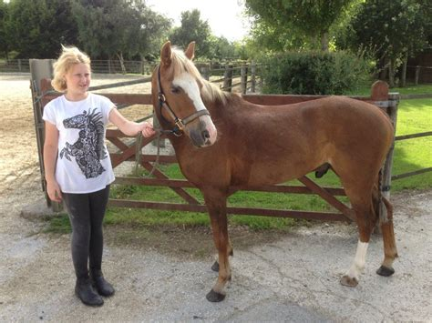Section B Pony For Sale by 12 2 Pony For Sale Show Type Wirral Merseyside