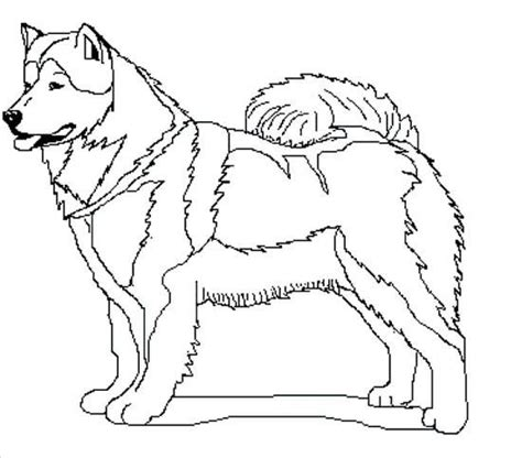 dog sled race coloring pages