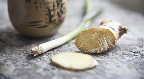 cucinare con lo zenzero fresco come mangiare lo zenzero fresco idee per usare lo zenzero
