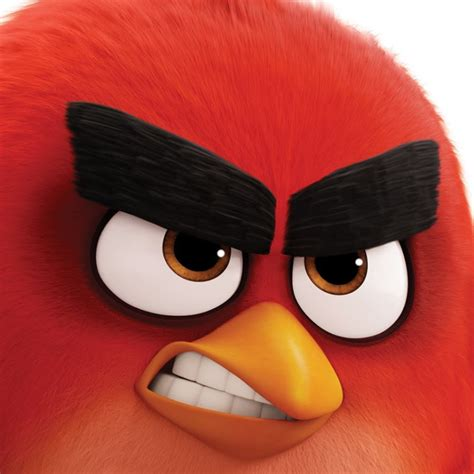 Pictures Of Angry Bird