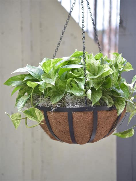 hanging plants best outdoor hanging plants for hgtv