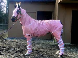 how to gift wrap a horse for christmas horse nation