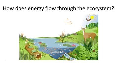 pattern of energy flow within an ecosystem energy flow in a food chain food ideas