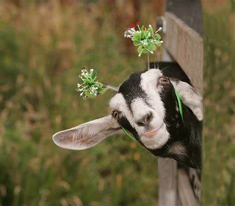 Happy Goat Meme - imagine a world with infinite possibilities for adventure