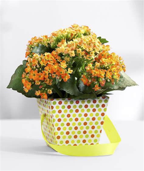 indoor flowering plants no sunlight indoor flowering plants no sunlight