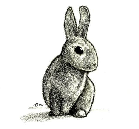 Rabbit Drawing For 1000 images about bunnies on bunny drawing