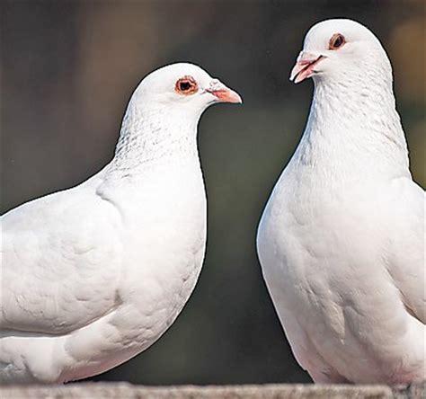 bird care guides petsmart