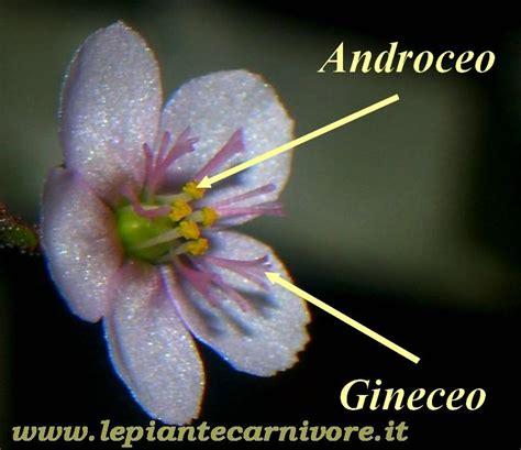 nomi di fiori maschili piante carnivore nomi tutti i nomi dei fiori bulbi nomi