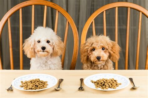 signs of constipation in dogs constipation symptoms and signs