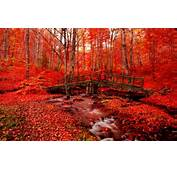High Quality Images Of Red Autumn In Cool Collection B