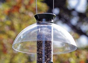how to make a rain guard for bird feeder how to stop grey squirrels from stealing bird food