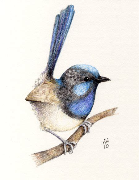 wren tattoo designs 185 best blue wren inspired arts and crafts images on